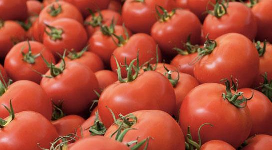 Cà chua biến đổi gene giúp ngăn bệnh tim mạch - 1