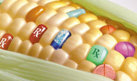 Thực phẩm biến đổi gene là gì, ảnh hưởng đến đời sống bạn ra sao? - 1